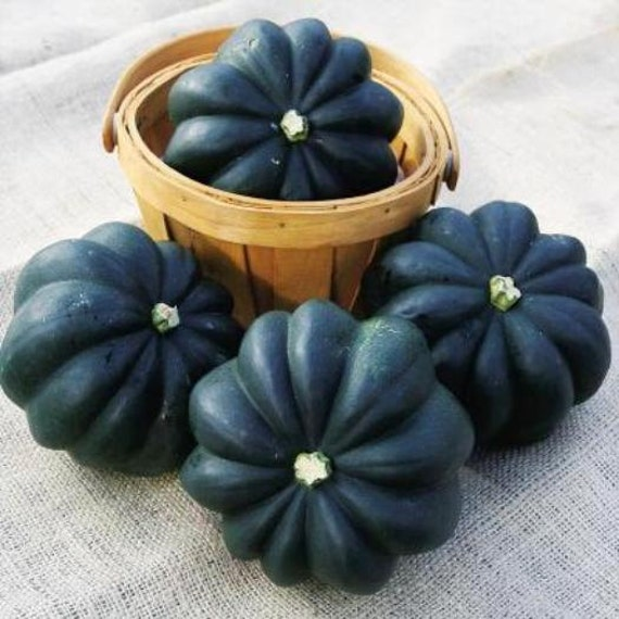35 heirloom acorn squash seed table queen by beanacresseeds for Table queen squash