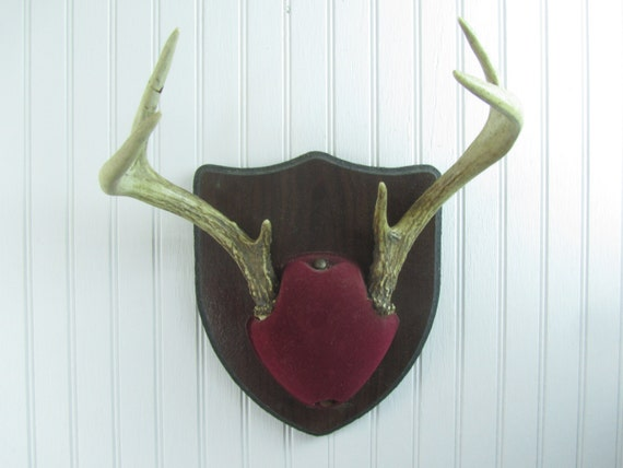 antler mount wall decor wall hanging hunting lodge cabin decor