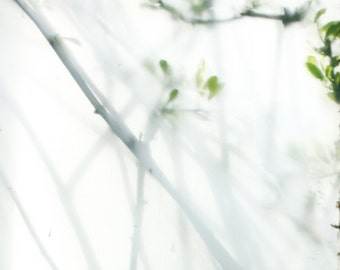 Fine art photography,wall art, photo, nature photography, glass,plant,green, stilllife,spring 11X14
