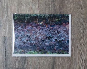 Fine art photo greetings card - frosted New Forest leaves