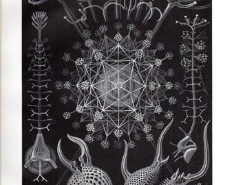 1899 Original Ernst Haeckel Print Phaeodaria Radiolarians Kunstformen Natur 1st Pl 61 Antique Print Science