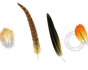 Bird illustration - Feathers - bird art, print of original artwork