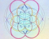 Telophase, flower of life inspired drawing