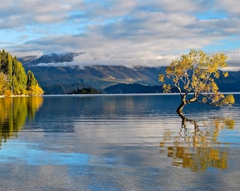 New Zealand, tree photography, fall, mountains, reflection, clouds, blue sky