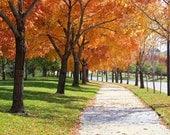 Autumn Photography, Fall Home Decor, Denver Wall Print, Fine Art Photography, Trees photo, Nature print - Autumn in Denver