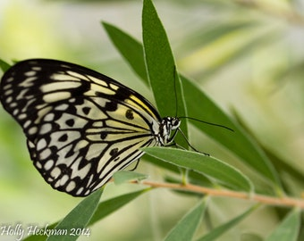 Butterfly on leaf photograph