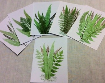 Fern Note Cards Set, Scanned Artistic Natural Display of Woodland Ferns, Set of 6 with Envelopes, Blank Any Occasion