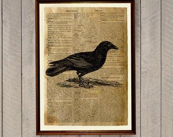 Raven poster Crow print Bird illustration WA143