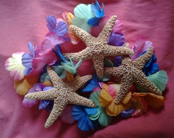 Sugar Starfish - Tropical Party Favor - Beach Wedding