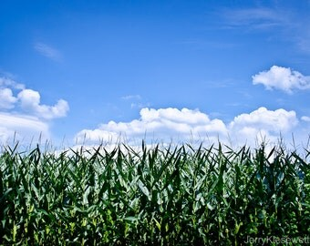 Corn Field Photo, Corn Field Art, Cornfield Photography, Country Landscape Photo, Cottage Wall Art, Blue and Green Home Decor, Fine Art