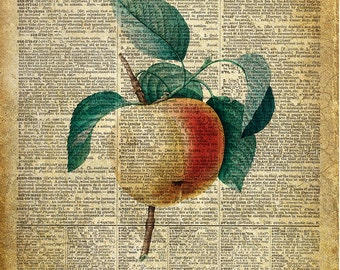 Apple, La Pomme, kitchen art print. Vintage dictionary page art print. Print on book page.