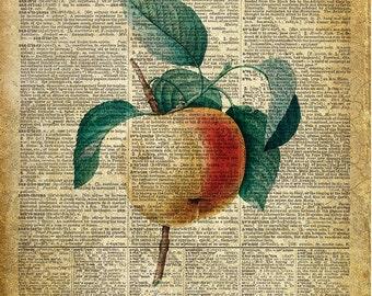 Apple, La Pomme, kitchen art print. Vintage dictionary page art print. Print on book page.