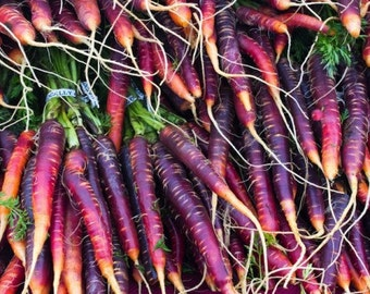 Carrot - Cosmic Purple (100% Heirloom/Non-Hybrid/Non-GMO)