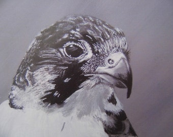 Peregrine falcon Art Limited Edition Mounted A3 Artist print of beautiful bird of prey direct from artist studio