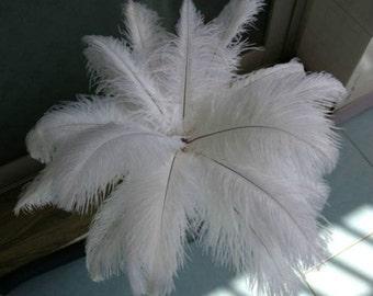 """100 pcs 12-14"""" ostrich feathers"""