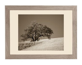 Oak photograph, Tuscany landscape, Italy landscape, Italy photography, sepia landscape. Oak tree, wheat field. Sepia. Fine Art photography.