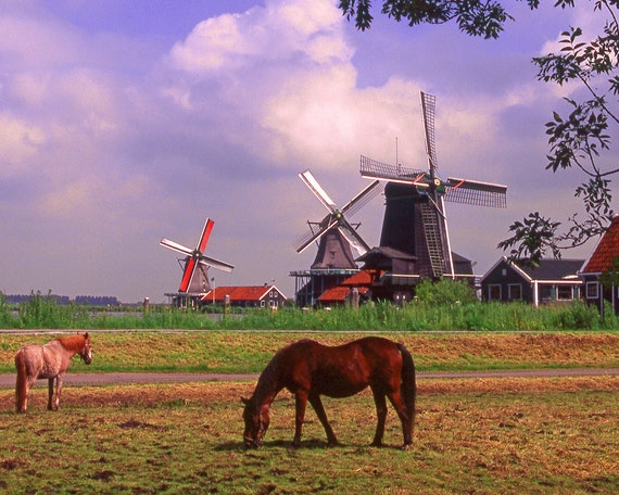 Horses With Windmill Fine Art Photography Wall Photo Print