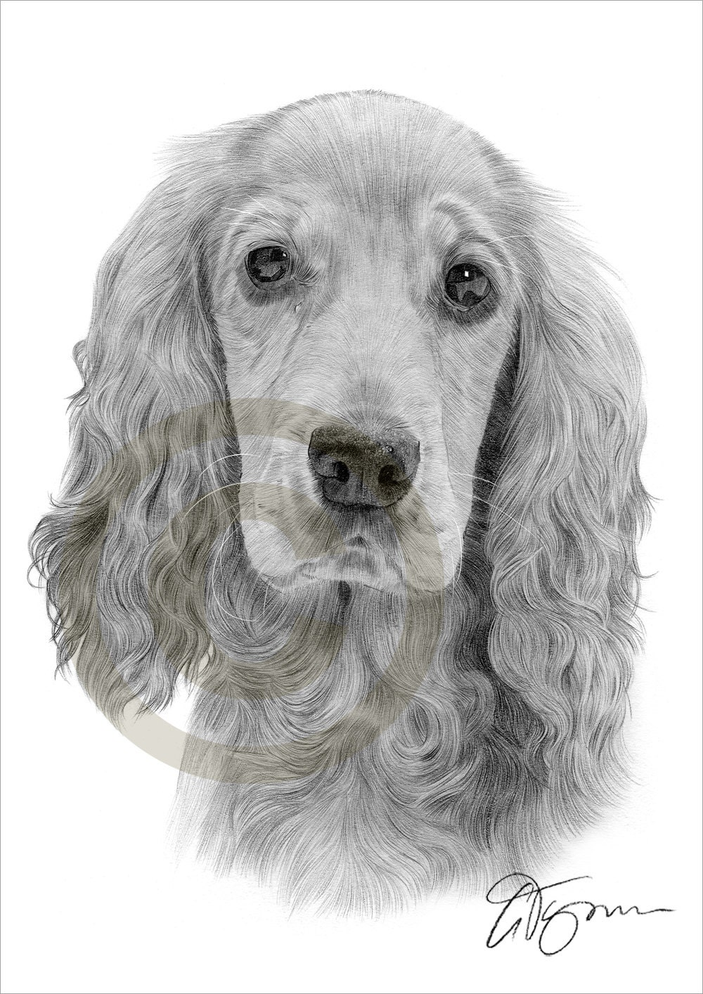 Crayon de cocker spaniel chien dessin imprimer oeuvre format - Dessin d un chien ...