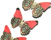 24 Salmon Red, Black, Copper & Gray Paper Butterflies for DIY weddings, butterfly baby showers, DIY school kit, wall décor,stocking stuffers