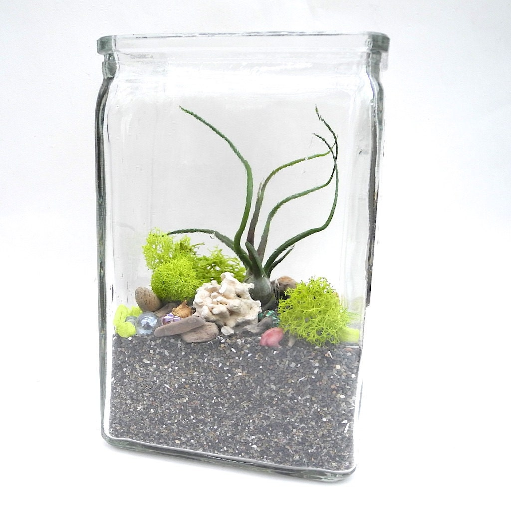 easy diy miniature garden terrarium kit with sea theme. Black Bedroom Furniture Sets. Home Design Ideas