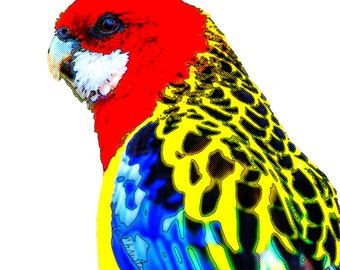 Bird Rosella Parrot Poster Art Print Instant Digital Download Boho Comic Mixed Media Modern Home Wall Decor Red Aqua Blue Yellow All Sizes