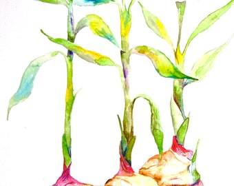 "Watercolor Painting, Still Life, Original Art, Ginger Sprouting, 11""x15"""