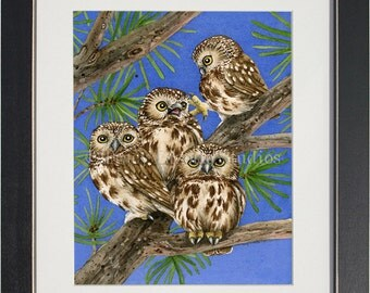 Owl Tree with Saw-Whet Owls- archival watercolor print by Tracy Lizotte