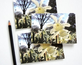 white daffodil note cards, flower photograph card set, botanical stationery, spring flower invitation