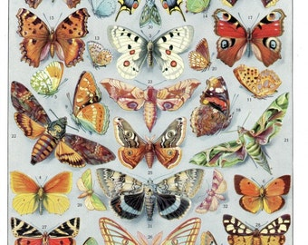 antique exotic butterflies french illustration digital download