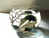 Terrarium Japan Wonder Shell Maneki Neko Lucky Cat and Marimo Moss Balls