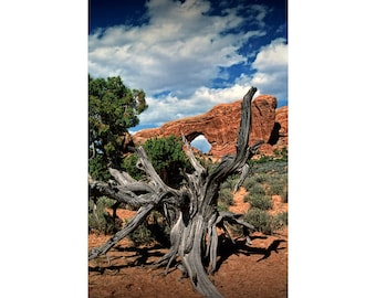 Arches National Park Red Rock Sandstone Arch Formation and Tree Stump in the desert near Moab Utah a Nature Landscape Photograph No.0003