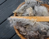 2 oz Washed Lincoln Longwool Locks, Tricolor, Gray, White, Black, Extra Long, 6+ Inches, Conservancy Breed, Long Locks, Humanely Sheared
