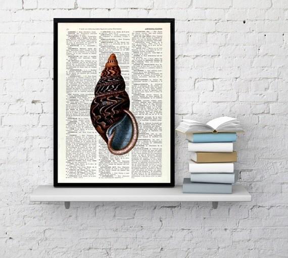 Art Print- Sealife print Seashell III Print, wall art poster print, shell print, wall hanging sealife print, Bathroom wall decor BPSL017