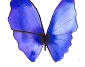 """violet and ultramarine purple butterfly original watercolour painting 7 x 5"""""""