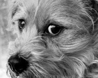 Dog Photo, The Serious Dog, Black & White Animal Photography