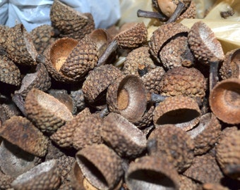 100 -  acorn tops