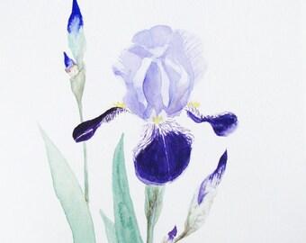 Iris flowers painting art print, purple flower art, botanical watercolor, spring garden decor