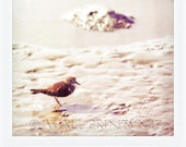 Nature Photography- Photography of Bird looking for food in the Sand on the Beach in Chiloe - Grey - Polaroid - Art