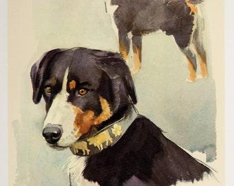 Appenzeller Mountain Dog Print Vintage Dog Art Cottage Home Decor Dog Gallery Wall Art Plaindealing 949R