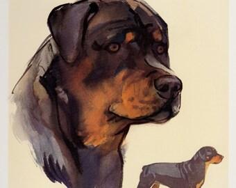 ROTTWEILER Dog Print Vintage Dog Art Cottage Home Decor Dog Gallery Wall Art Plaindealing 951T