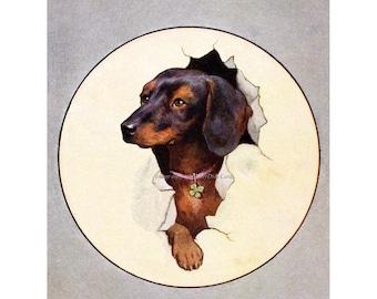 Dachshund Fabric Block | Dog Burst Through | Puppy Fabric