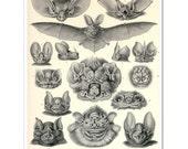 Bats Art Print, Vampire Bats Poster, Art Nouveau Ernst Haeckel Scientific Illustration, Bats Illustration, Educational Art, Wall Hanging