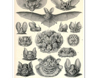 Bats Print, Vampire Bats Poster, Art Nouveau Ernst Haeckel Print, Science Print, Bats Illustration, Educational Art