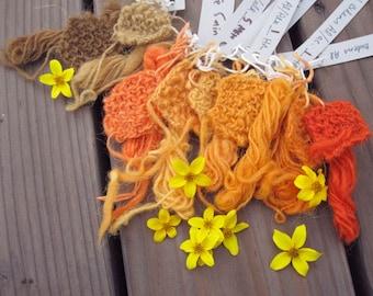 Bidens Seed--Natural Dye Plant 2016 Homegrown Dye Garden