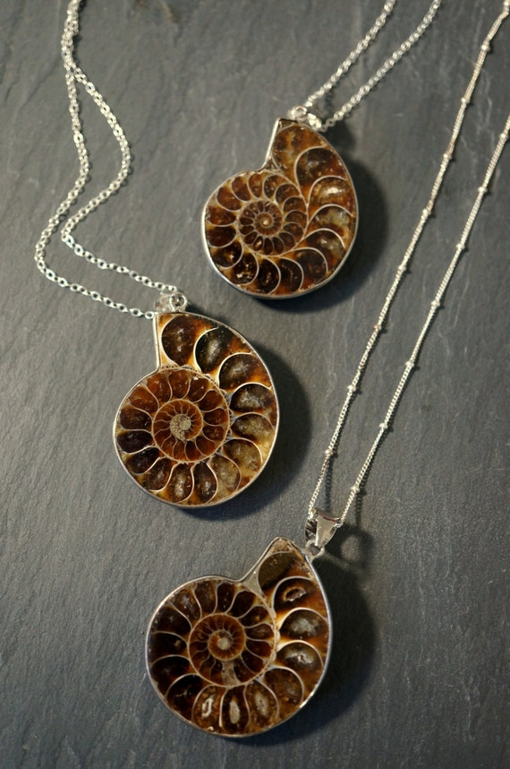 Ammonite fossil ammonite necklace silver ammonite necklace like this item aloadofball Images