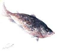 Salmon painting, Original watercolor painting, 14 X 11 in, salmon fish art, fish wall art, wild salmon fishing