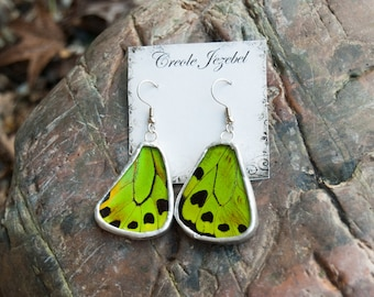 FREE SHIPPING  Real Green Birdwing Butterfly Wings Encased in Hand Cut Glass and Soldered Earrings