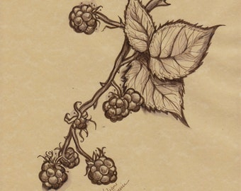 Blackberries (Original ink)
