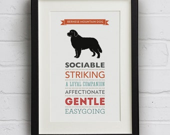 Bernese Mountain Dog Breed Traits Print