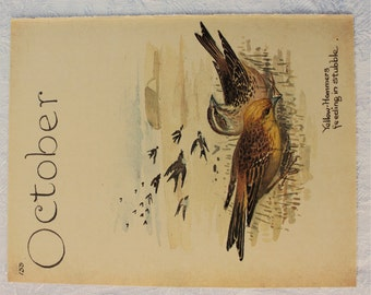 Vintage Botanical Book Page - October - Yellow Hammers - Country Diary of an Edwardian Lady - Edith Holden